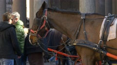 Traditional carriage horse waiting tourists attraction tired sad animal Stock Footage