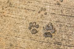 Dog paw print on asphalt Stock Photos