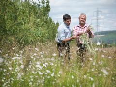Farmers with biomass fuel 'salix' (willow) for burning in power station Stock Photos