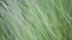 Abstract texture background of grass Stock Footage