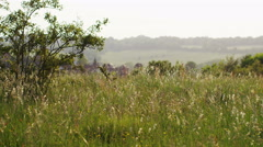 4K Landscape view of the countryside as grass sway in the breeze, in slow motion Stock Footage