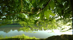 Floodplain forest at early morning, special light Stock Footage