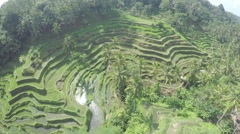 Aero Flight Over Rice fields, Ubud, Bali - stock footage