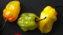Scotch Bonnet Chilis Stock Footage