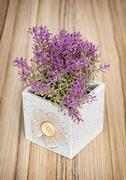 Decorative potted plant on the wooden background, home decoration Stock Photos