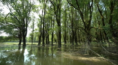 Danube Floodplain Forest in Gemenc Stock Footage