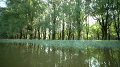Danube Floodplain Forest with sun glitter Stock Footage