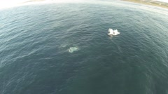 Aerial footage of Whales breaching and tail slapping - stock footage