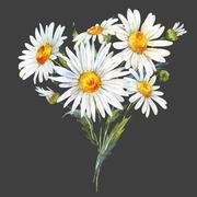 Watercolor daisy bouquet Stock Illustration