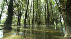 Danube floodplain forests when the river floods, pan movement Stock Footage
