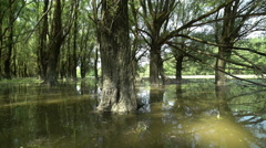 Danube floodplain forests when the river floods Stock Footage