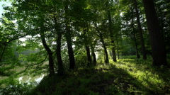 Floodplain forest at early morning Stock Footage