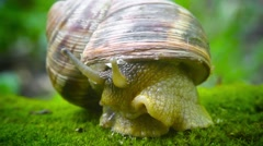 Cautious snail closes from danger Stock Footage