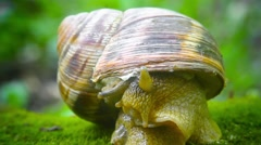 Snail examines territory after disclosed Stock Footage