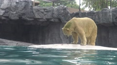 4k, Polar bear go out of the water for eat fish in the zoo-Dan - stock footage