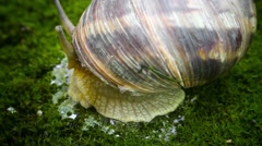 The grape snail on the side Stock Footage