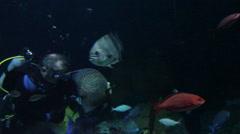 Aquarium diver feeding fish - stock footage