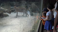 4K, Children looking and taking photograph with camera phone of Puma in zoo-Dan - stock footage