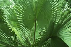 Tropical flora Stock Photos