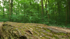 Moss Covered Fallen Tree In Forest Stock Footage