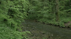 River runs trough beautiful forest in 4K Stock Footage