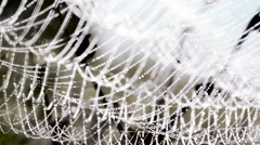 cobwebs ,spider web with dew drops,, Slow Motion - stock footage