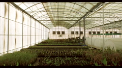 Farm worker working at greenhouse. - stock footage