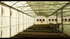 Plants at greenhouse. Stock Footage