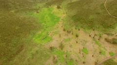 Aerial: Lachay Hills (Peru) Stock Footage