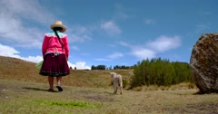 Shepherdess with sheep walking away. Peru, South America Stock Footage