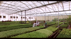 Botanists with worker analysing plants at greenhouse. Stock Footage