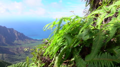 Revealing amazing jungle mountain valley behind the young trees and fern plants Stock Footage