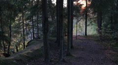 Hiking Trail in a Northern Mixed Wood Forest Stock Footage