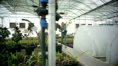 Farm worker carrying potted plant at greenhouse. - stock footage
