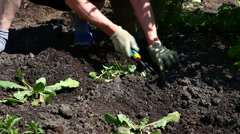 Gardener in green garden and grass Stock Footage