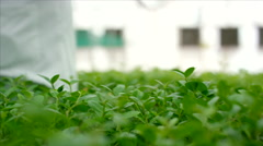 Botanist pruning leaves at greenhouse. Stock Footage