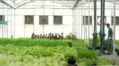 Botanist and farm worker at greenhouse. Stock Footage