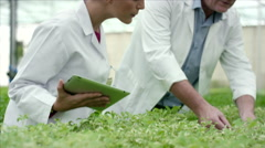 Botanists analysing plants at greenhouse. Stock Footage