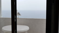 Seagull on hotel balcony Stock Footage