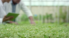 Botanists with worker analysing plants at greenhouse. - stock footage