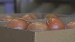 Close Up Of Box Of Tomatoes On Conveyer Belt In Packing Shed Stock Footage