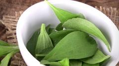Stevia leaves (seamless loopable; 4K) Stock Footage