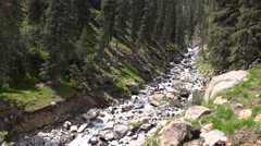4K video of rapid stream in mountain fir tree forest. Kyrgyzstan - stock footage