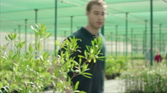 Farm worker unloading potted plant. - stock footage