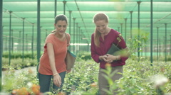 Women discussing at plant nursery. Stock Footage