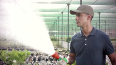 Worker watering plants at greenhouse. Stock Footage