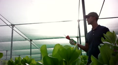 Worker watering plants at greenhouse. - stock footage