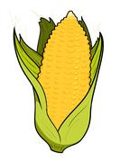 Corn - stock illustration