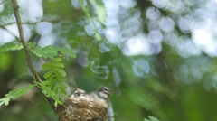baby birds getting fed by their mother - stock footage