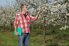 Farmer or agronomist in blossoming plum orchard Stock Photos